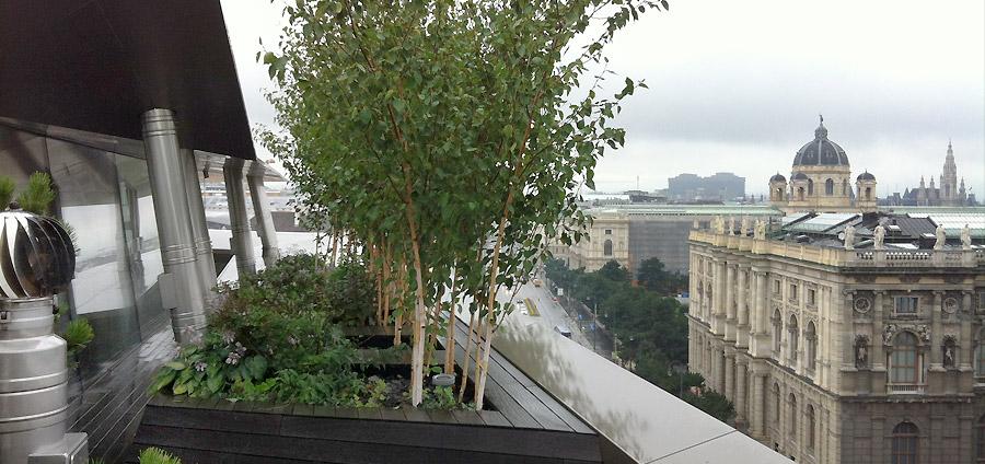 WEIDLFEIN Gartenkunst Dachgrten